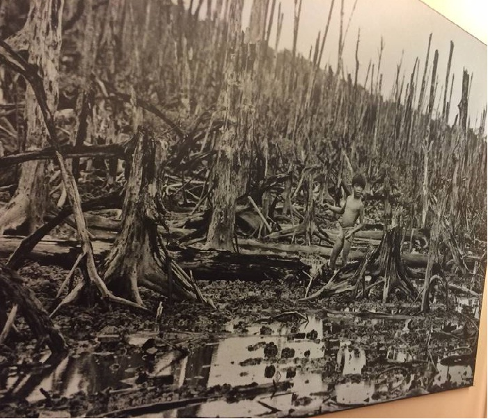 Destructed-Forest-in-Chemical-Used-in-War