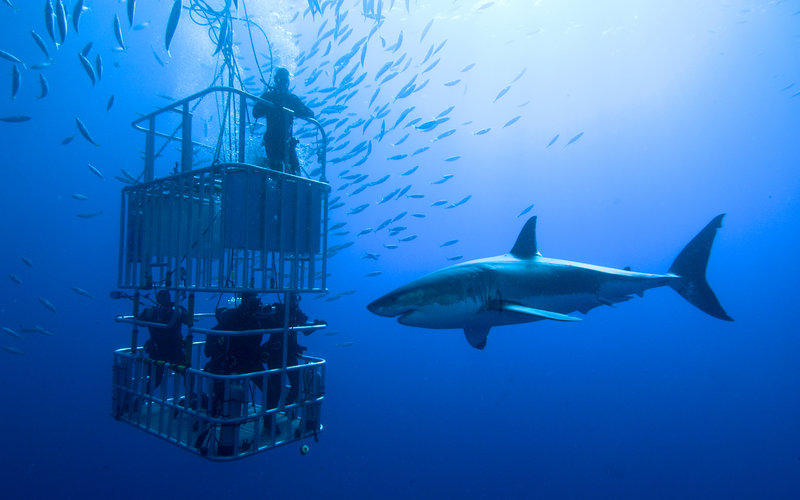 rsz_great-white-shark-cage-diving-south-africa
