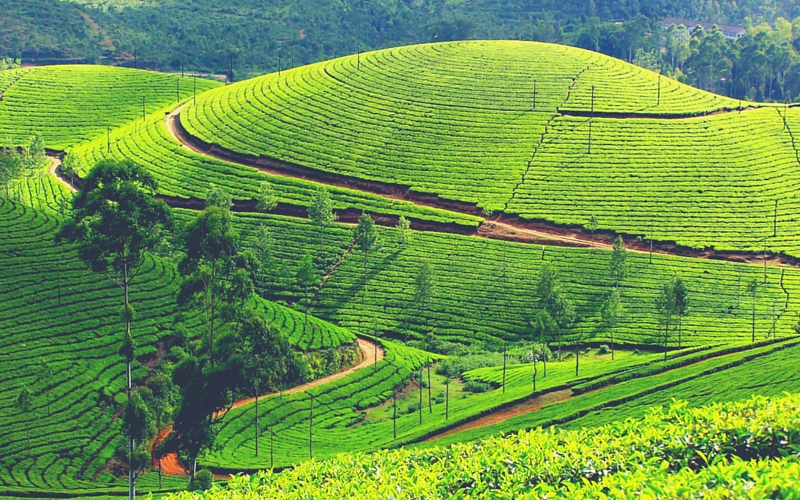 Kerala Tour Packages with Flamingo Travels