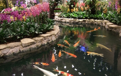 'Koi fish at Changi Airport, Singapore - Flamingo Travels